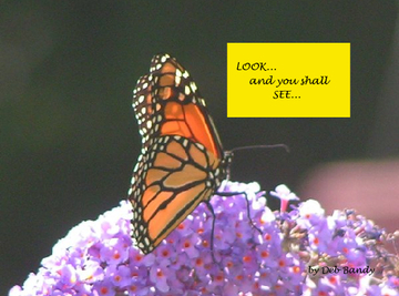 Look and You Shall See....