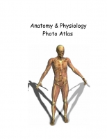 Anatomy & Physiology Atlas