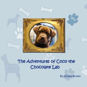 The adventures of Coco the Chocolate Lab