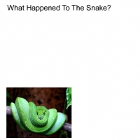 What Happened To The Snake?