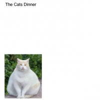 The Cats Dinner