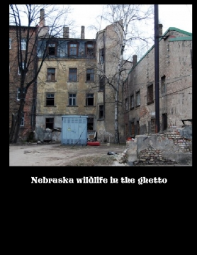 Nebraska wildlife in the Ghetto