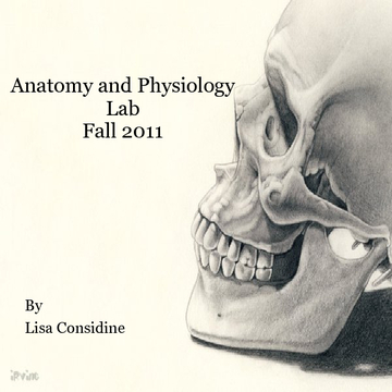 Anatomy and Physiology Lab