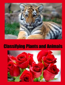 Classifying plants and animals