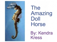 The Amazing Doll Horse