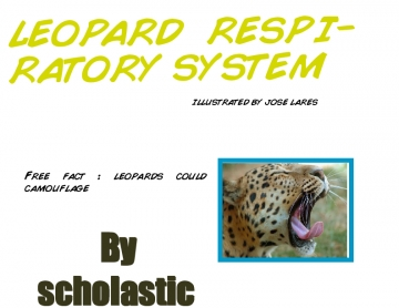 Leopards respiratory system