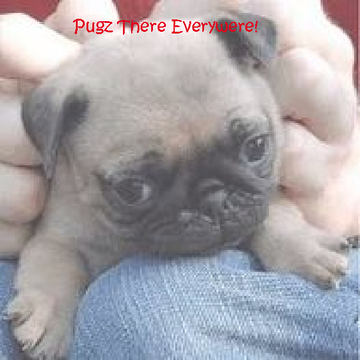Pugz There Everywere
