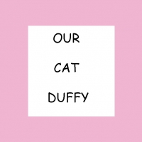 Our Cat Duffy