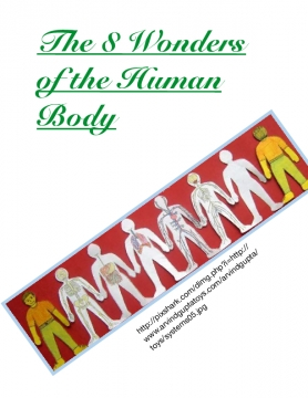 The 8 wonders of the Human Body