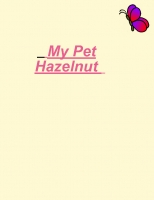 My pet Hazelnut
