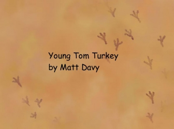 Young Tom Turkey
