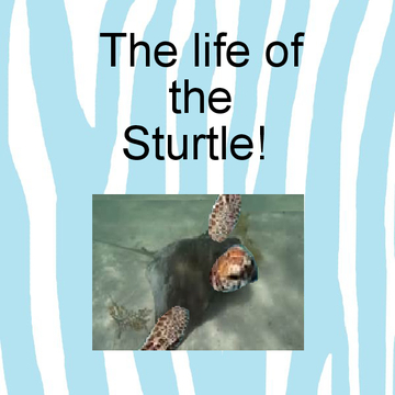 The Life Of The Sturtle