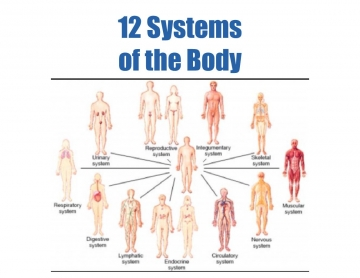 12 Systems of the Body