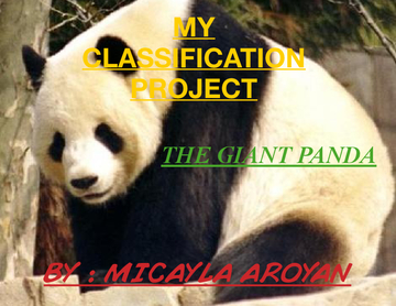My Classification Project