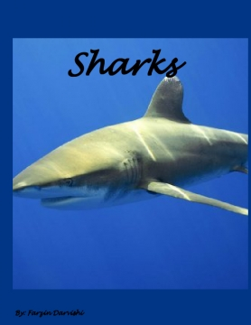 What we know about sharks!