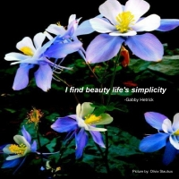 I find beauty in life's simplicity