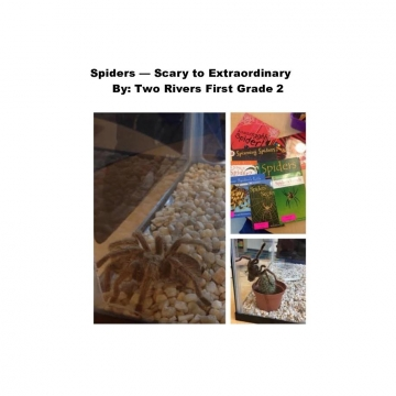 Spiders -- Scary to Extraordinary