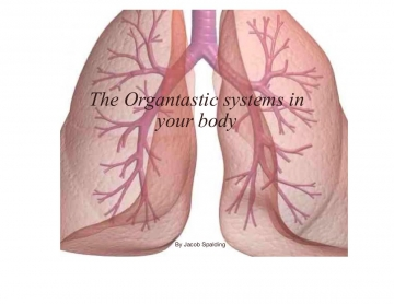 The Organtastic systems of the body