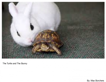 The Turtle and The Bunny