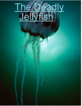 The Deadly Jellyfish