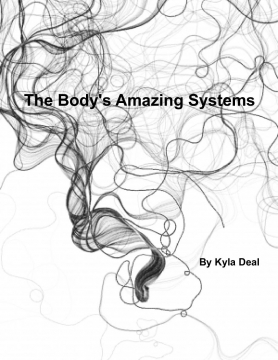 The Body's Amazing Systems