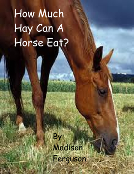 How Much Hay Can A Horse Eat?