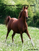 Grooming and Tacking your Horse