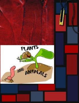 CLASSIFYING PLANTS BAND ANIMALS