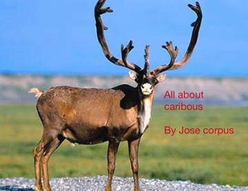 All about caribous