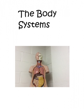My journey through the body system