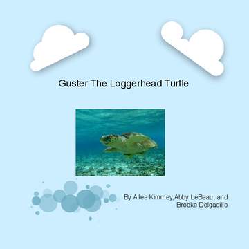 Guster The Loggerhead Turtle