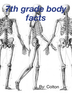 7th grade body facts