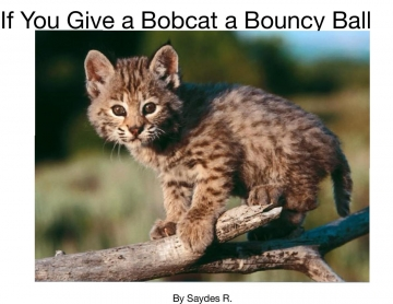 If You Give a Bobcat A Bouncy Ball