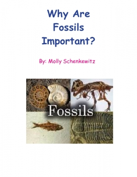 Why Fossils Are Important