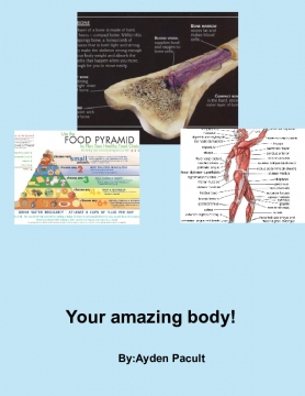 Our Amazing Human Body