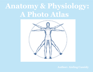 Anatomy & Physiology Photo Atlas
