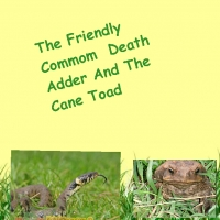 The Friendly Common Death Adder And The Cane-Toad