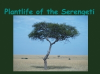 Plantlife of the Serengeti
