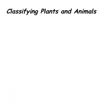classifying plans and animals