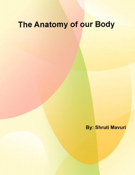 The Anatomy of our Body
