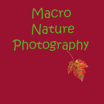 Macro Nature Photography