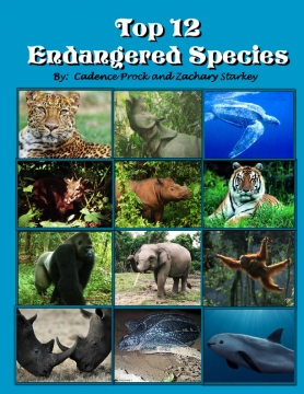 Top 12 Endangered Species