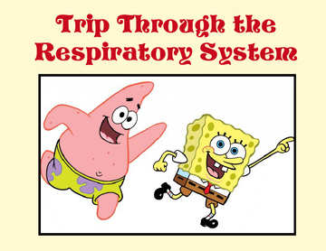 Trip Through the Respiratory System