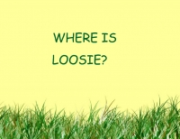 where is loosie