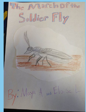March Of The Soldier Fly