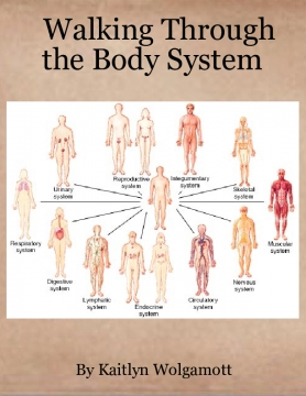 Walking Through the Body System