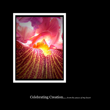 Celebrating Creation