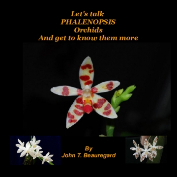 Let's talk Phalenopsis Orchids