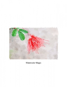 Watercolor Magic