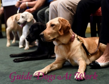 Guide Dogs At Work